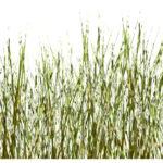 Gras und Stein