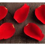 rote Bl¸tenbl‰tter Rose