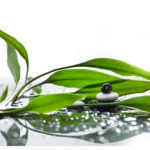 Asian eco backgrounds with bamboo and water drops